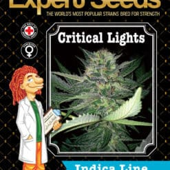 Critical Lights