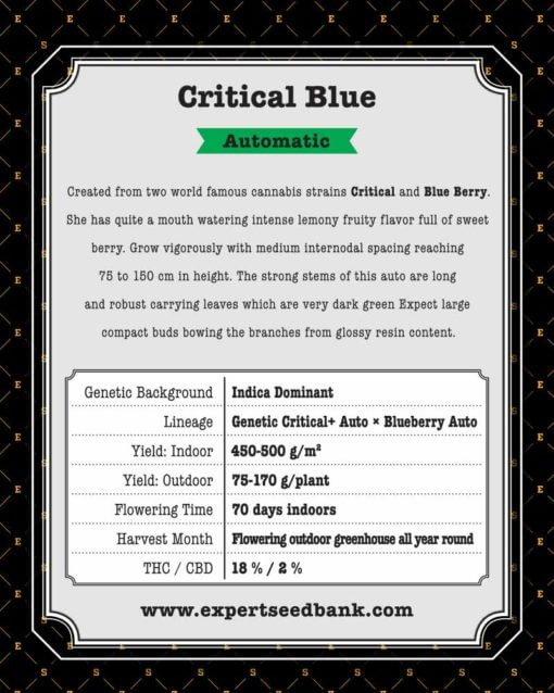 Critical Blue Auto