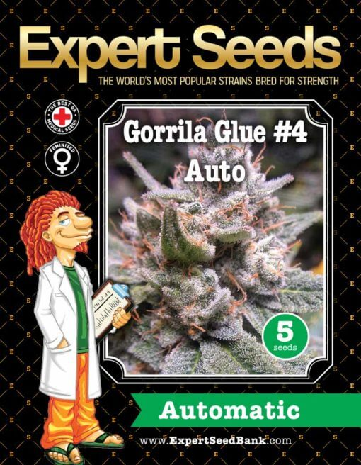 Gorrila Glue #4 Auto