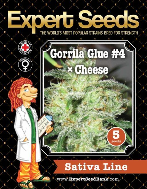 Gorrila Glue #4 × Cheese