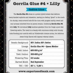 Gorrila Glue #4 × Lilly