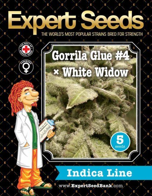 Gorrila Glue #4 × White Widow