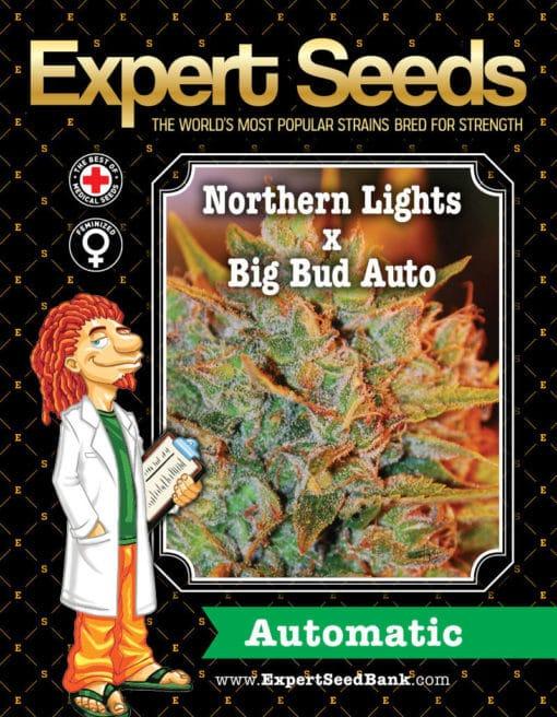 Northern Lights x Big Bud Auto