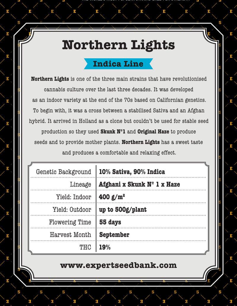 Northern Lights Seeds | Afghan x Haze x Skunk No1 | Cannabis