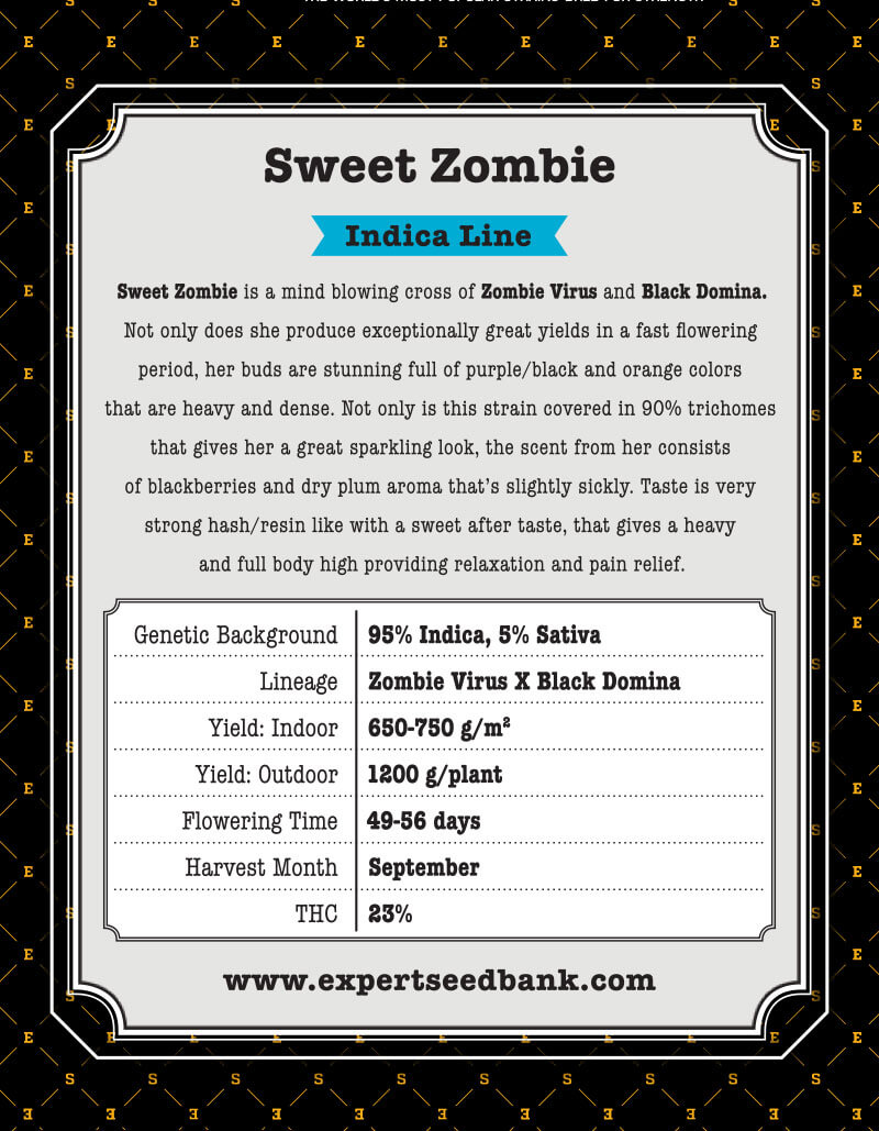 Sweet Zombie | Black Domina x Zombie Virus | Cannabis Seeds