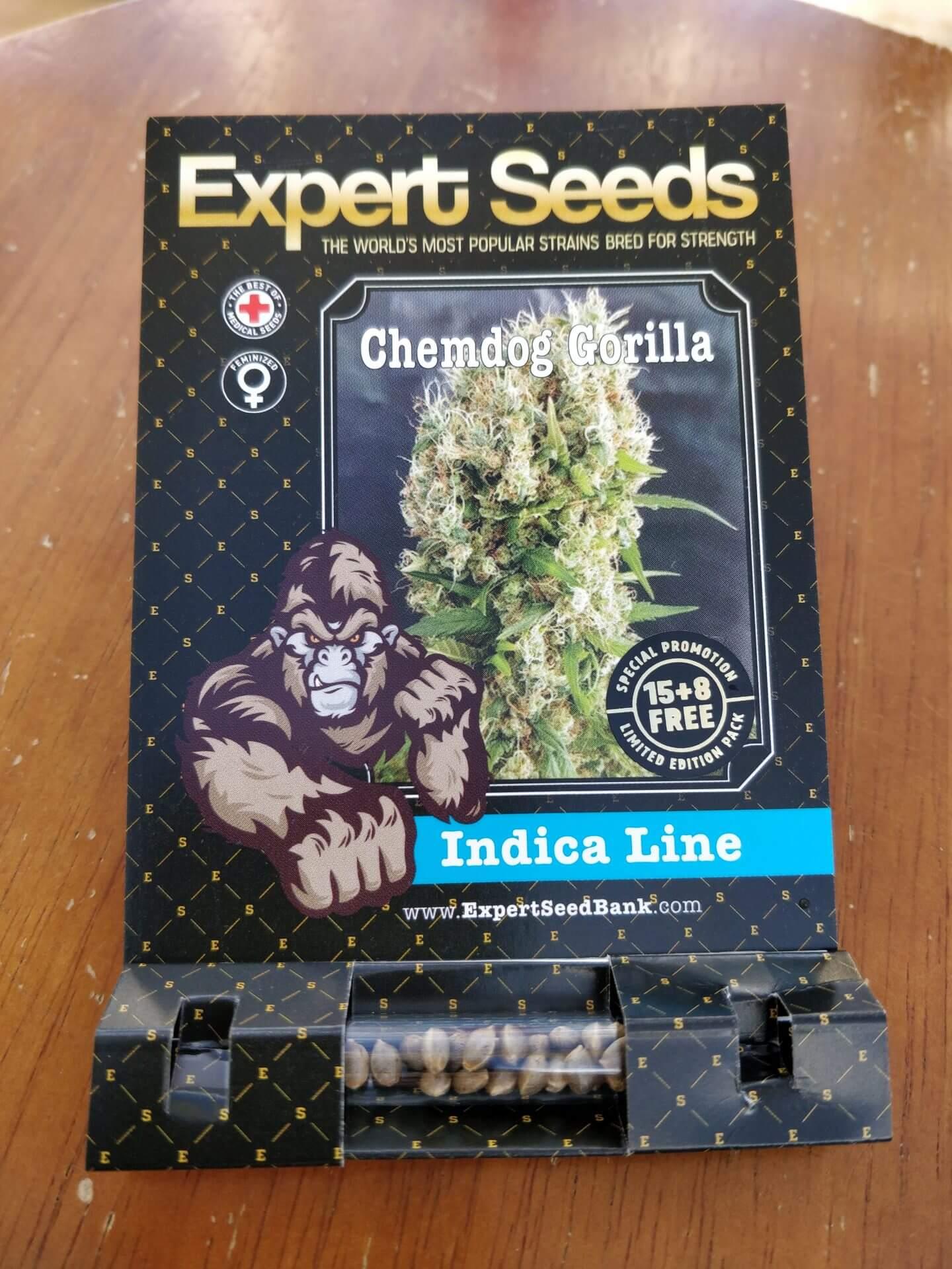 Chemdog Gorilla   Chemdog Millionare X GG4   Cannabis   Expert Seeds