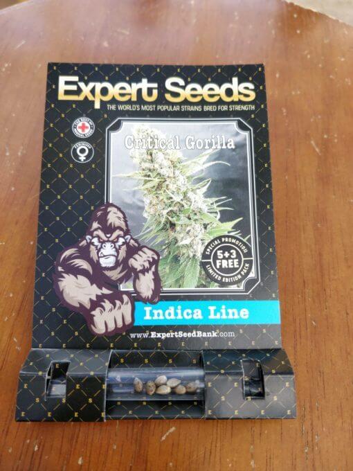 Gorilla Critical Expert Seeds Pack Size 1