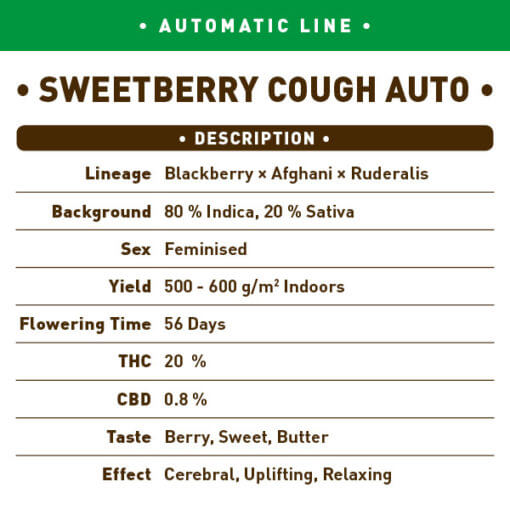 Sweetberry Cough Auto