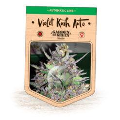 Violet Kush Auto